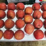 세잎크로바 사과농장 부사(미안마) 5kg 21과