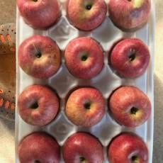 세잎크로바 사과농장 부사(후지) 10kg 22과~32과 - 흠과