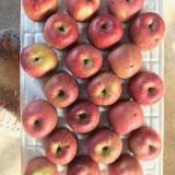 세잎크로바 사과농장 부사(후지) 10kg 29~34과 - 흠과