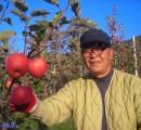 [햇살찬산사과]부사(미얀마) 3kg(8과 ~9과)껍질째 먹는 山사과 2018년