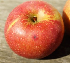 [봉화청량사과] 부사 사과10kg  흠과(35과~45과 이내)