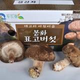생표고버섯 2kg(상)