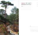 금강소나무(춘양목) 솔씨입장권엽서(1천장)