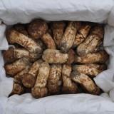 송이향기 송이버섯 3등급