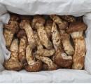송이향기 송이버섯 5등급